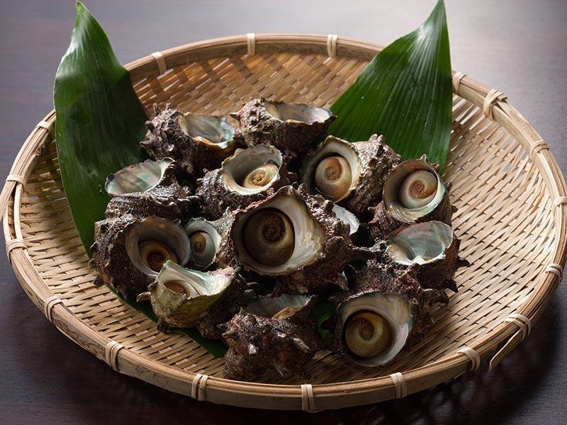画像1: 日本海産 天然サザエ(1.5kg) (送料別)【ギフト可】 (1)